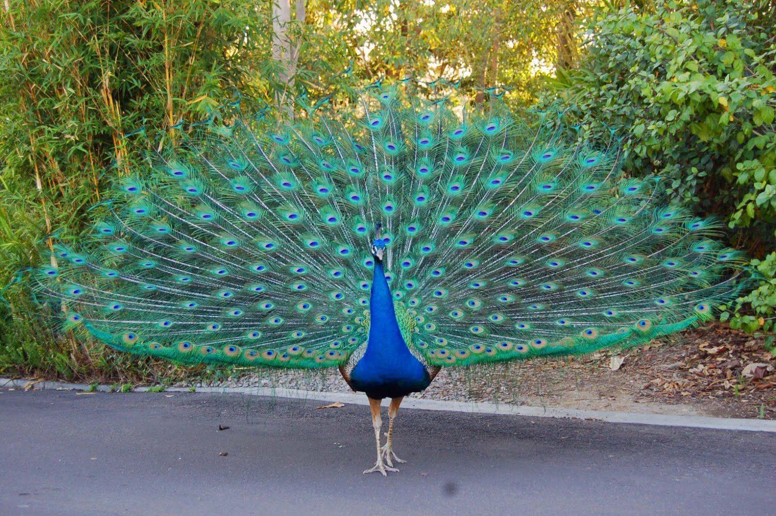 Peacock Wedding Theme Planningstips en -ideeën